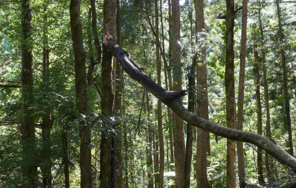 倒木処理や伐採の料金